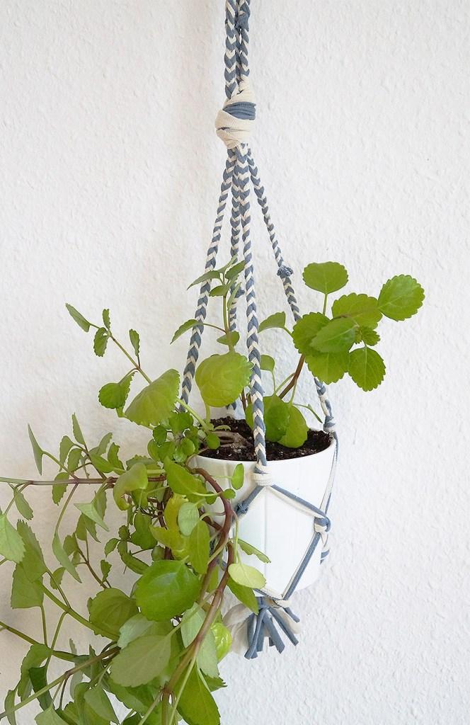 yarnplant1b