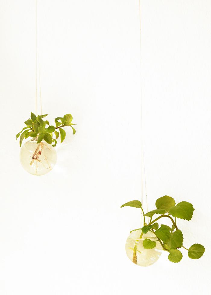 bauble plant