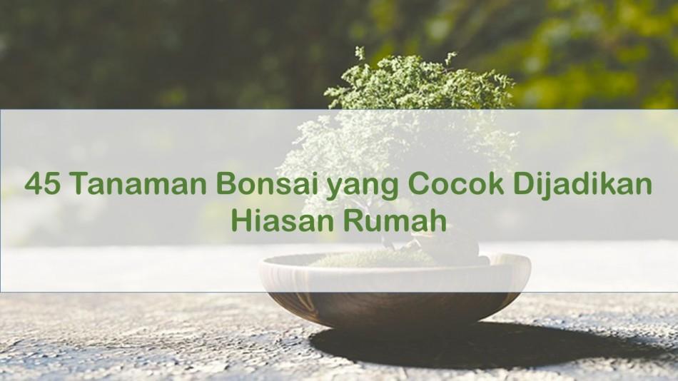 Jenis Tanaman Bonsai