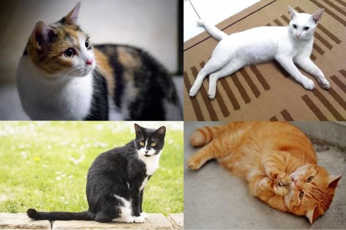 Nama Kucing