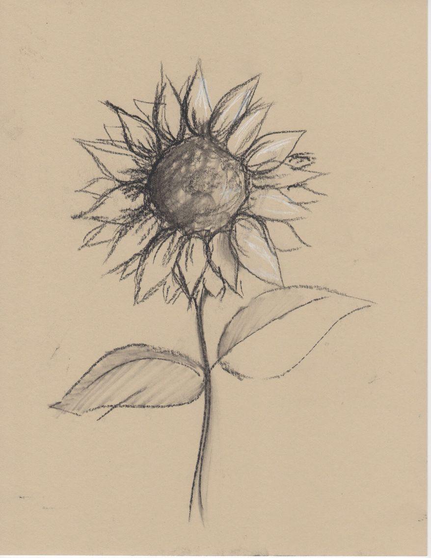 Gambar Sketsa Bunga Matahari