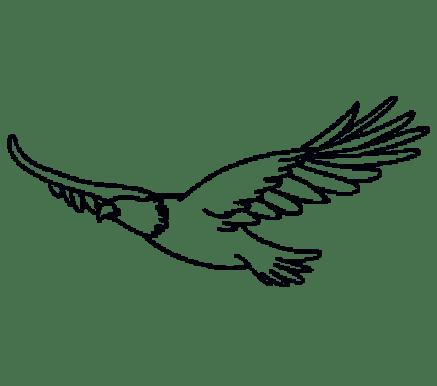 Cara Menggambar Garuda: Langkah 12