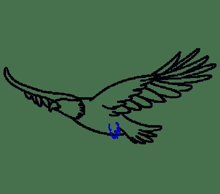 Cara Menggambar Garuda: Langkah 13