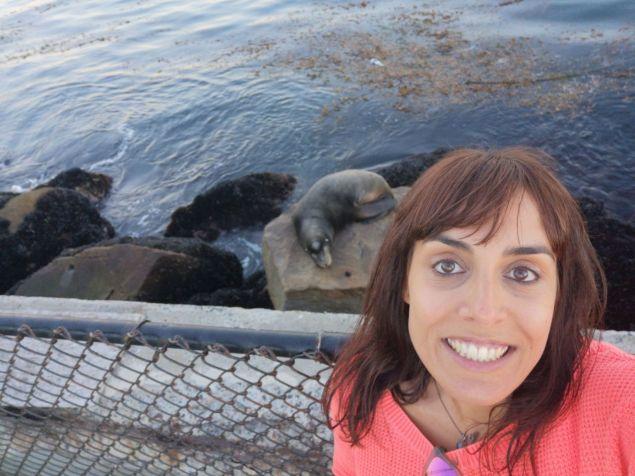 Leones marinos en Monterey