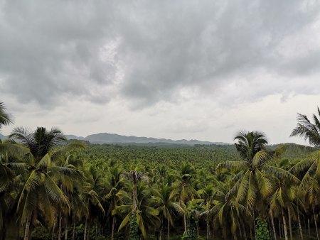 Mirador de las palmeras Siargao