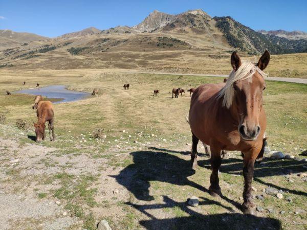 caballos en el Pla de Beret