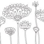 不思議な花の塗り絵
