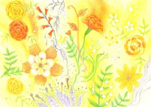 マリーゴールドの花の塗り絵
