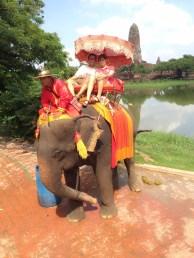 Elephant Camp - Ayutthaya City