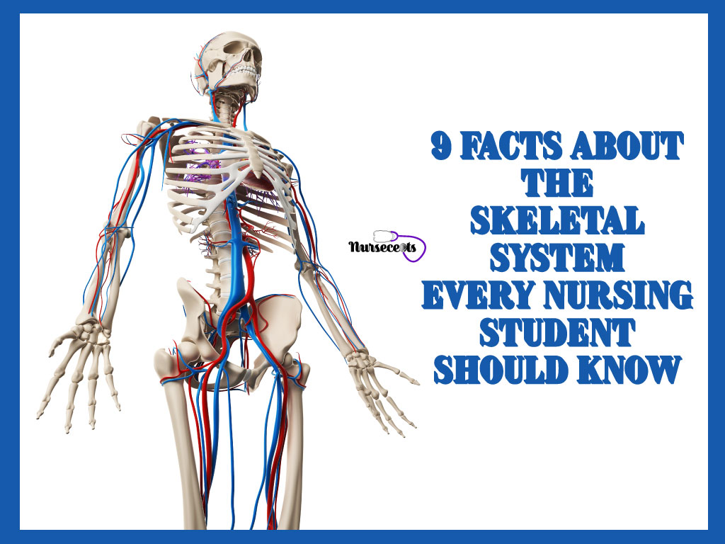 9 Facts About The Skeletal System Every Nursing Student