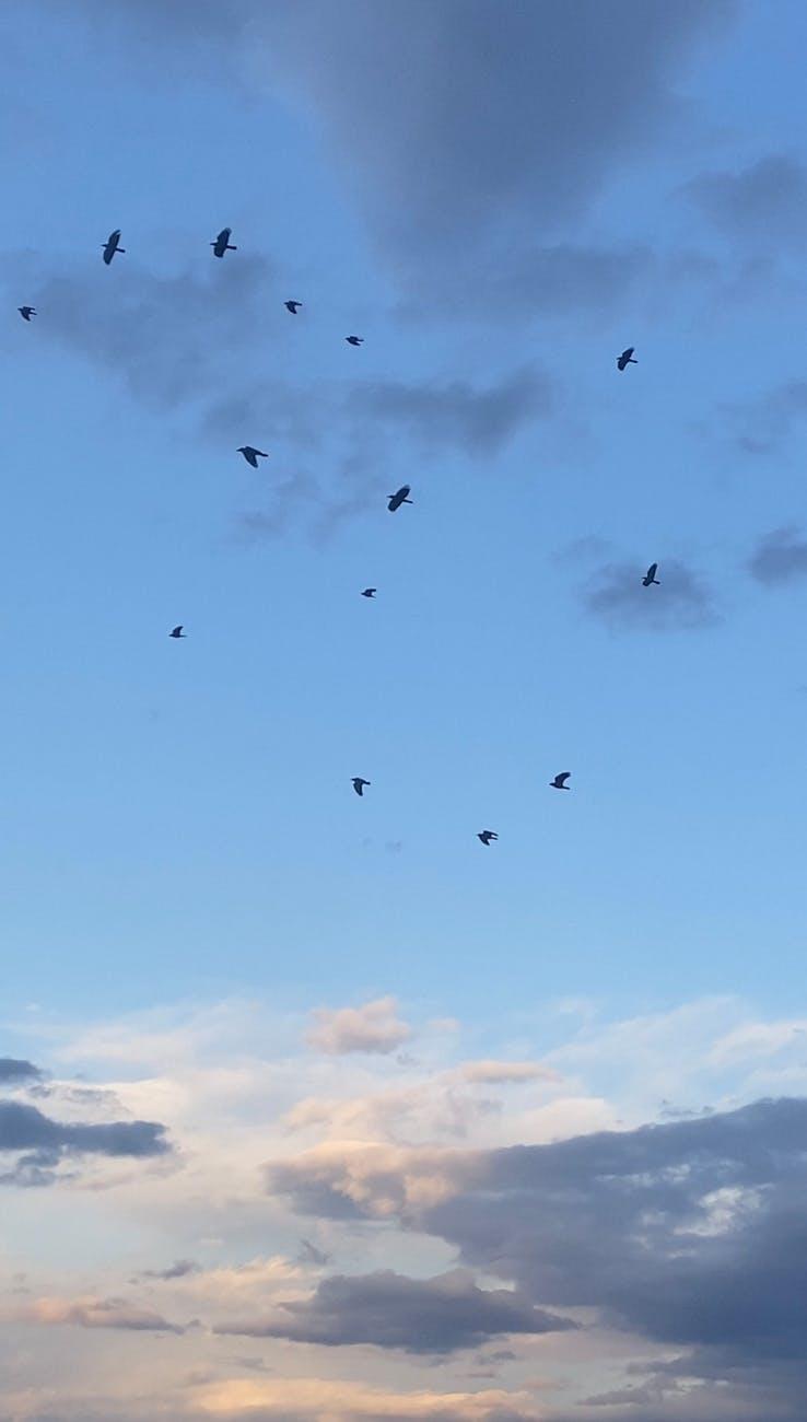 birds flying in cloudy sky