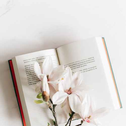 opened book with twig of magnolia