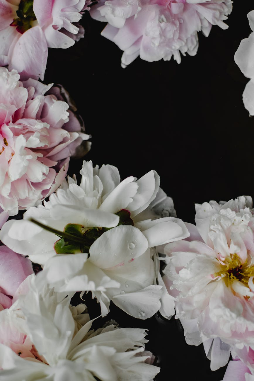 close up photo of white and pink flowers