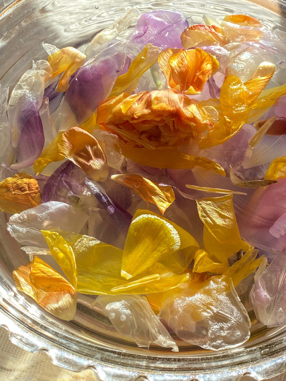 colorful petals in glass bowl in sunlight