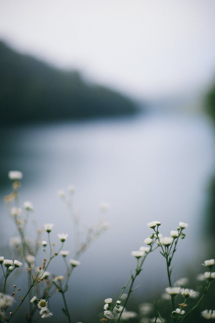 blossoming flowers against river and ridge in summertime