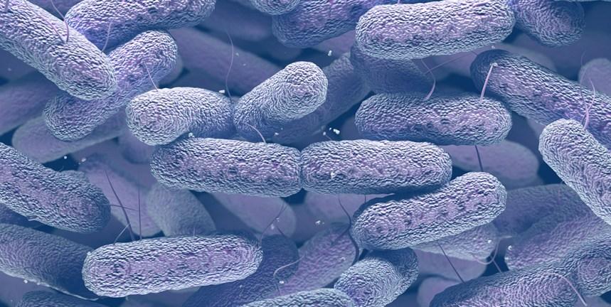 Klebsiella pneumoniae for nurses