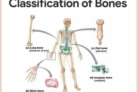 interior easy skeleton quiz » Electronic Wallpaper | Electronic ...