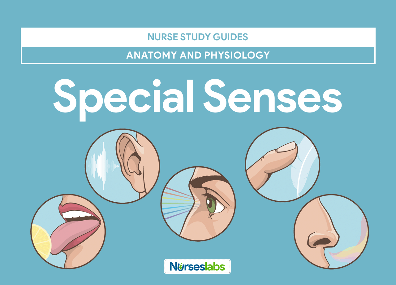 Chapter 10 Special Senses Worksheet Answers