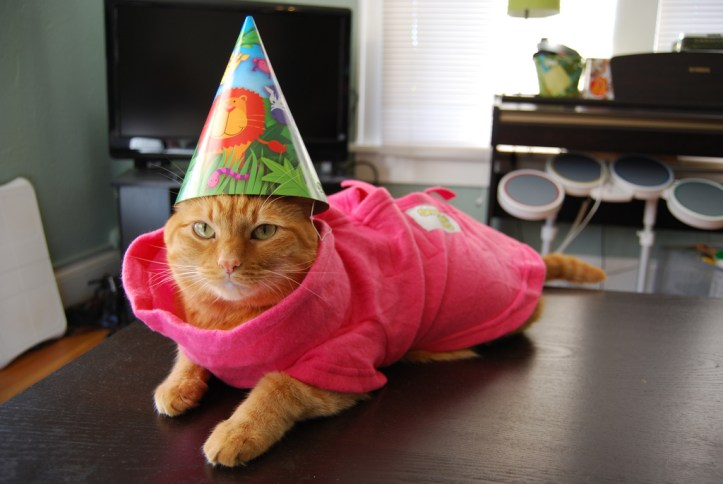Cat dressing in a birthday hat and shirt