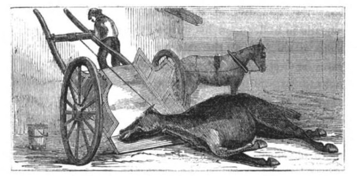 """Illustration from the chapter """"On Waste,"""" in The Uses of Animals in Relation to the Industry of Man, by Edwin Lankester (1860). (Google Books 