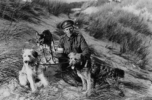 A British soldier holds three dogs which were trained to carry messages between the lines and command during World War I.