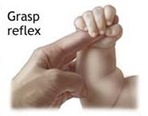 grasp reflex