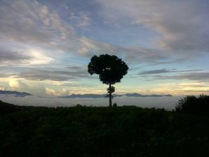 Pemandangan padi di Tebing Keraton Bandung (foto: MH Kholis)