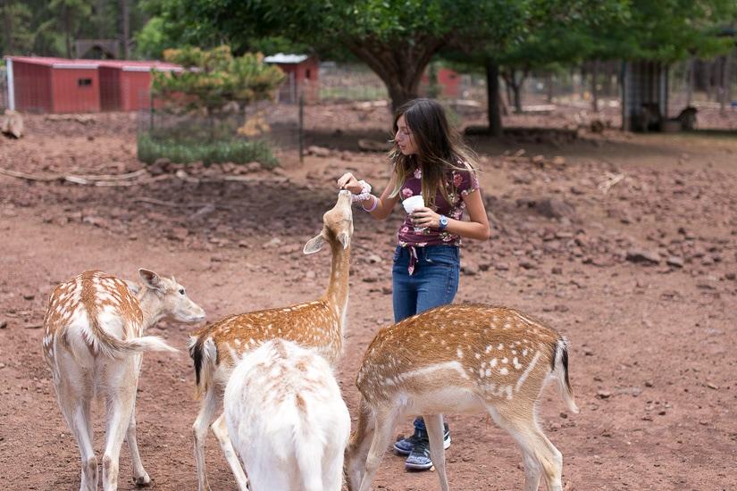 Deer Farm in Williams, Arizona