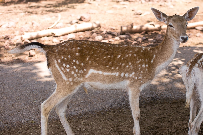 Deer Farm Grand Canyon