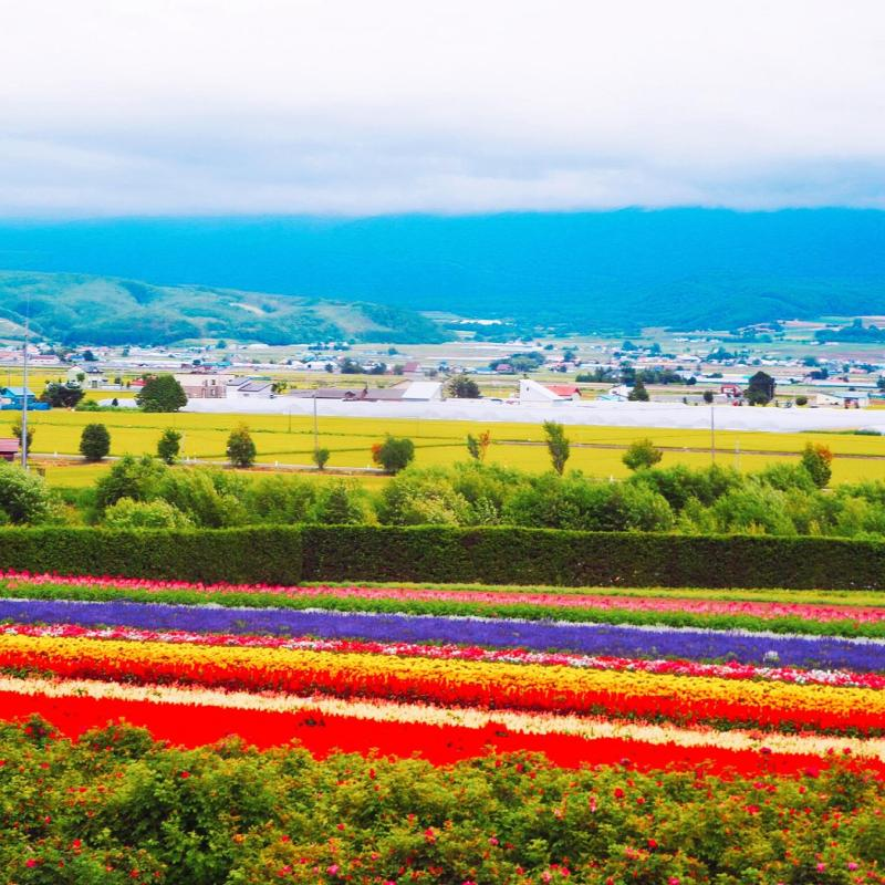 farm tomita flowers