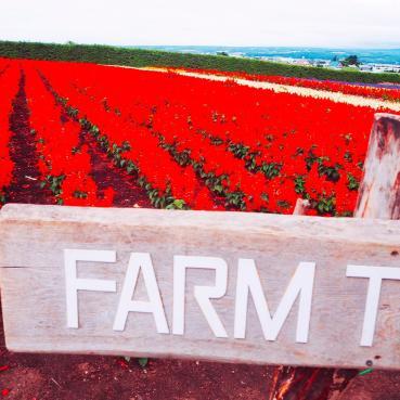 farm tomita red flower lane