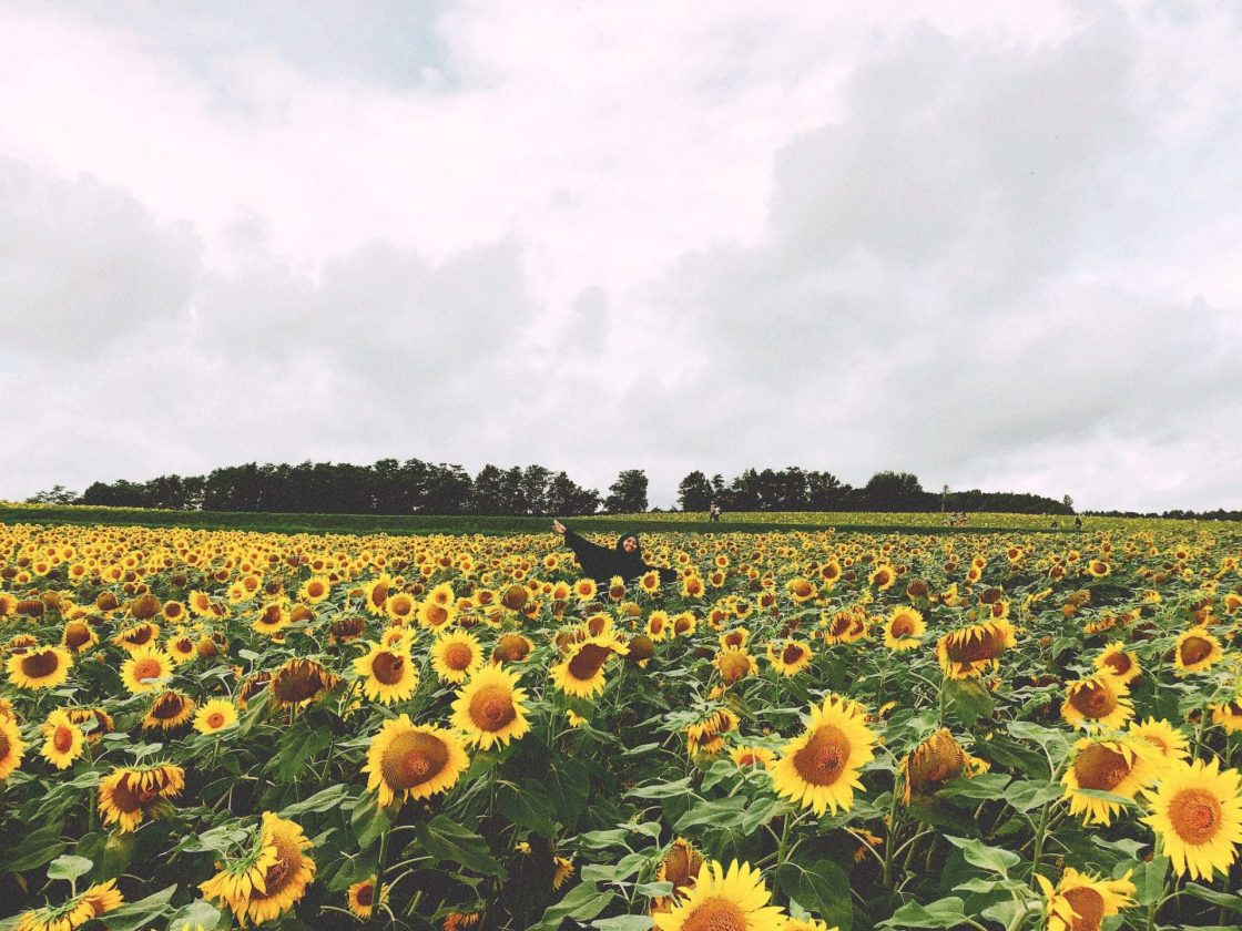 in a sea of sunflowers