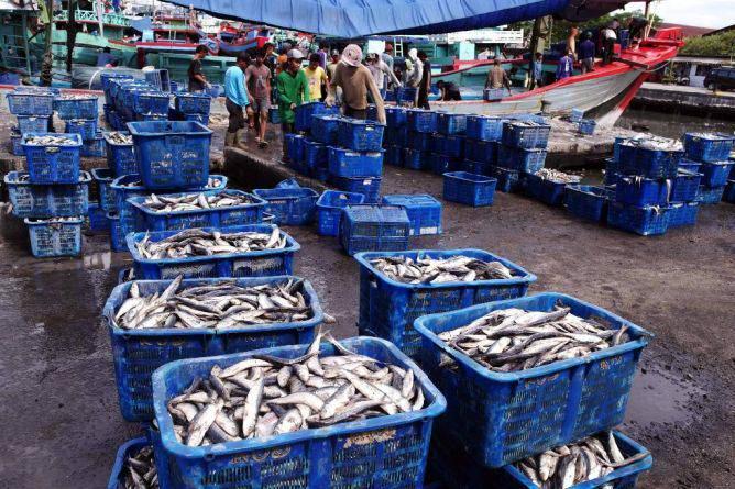 Pengusaha ikan ekspor/Foto Istimewa