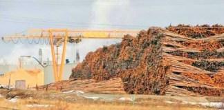 Industri pulp dan kertas di Indonesia/Foto: Dok. Katadata