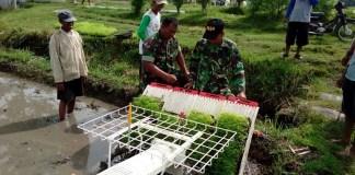 Babinsa Dukuh Dempok Dampingi Pok Tani Lakukan Percepatan Tanam/Foto Sis24