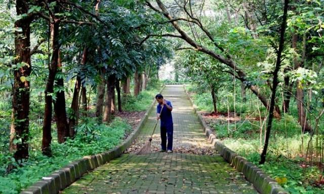 Pekerja sedang memberishkan Hutan Kota Srengseng Jakarta Barat | libregraphics.asia