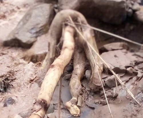 Jenazah korban tanah longsor Ponorogo. Foto Muh Nurcholis
