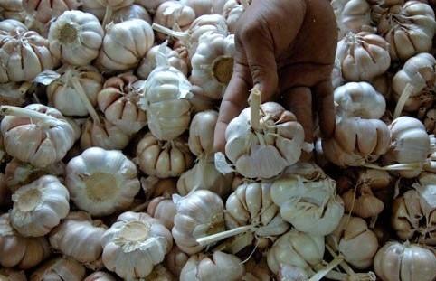 Lepas Ketergantungan, Kementan Tata Aturan Impor Bawang Putih. (Ilustrasi) Foto: Dok. Antaranews