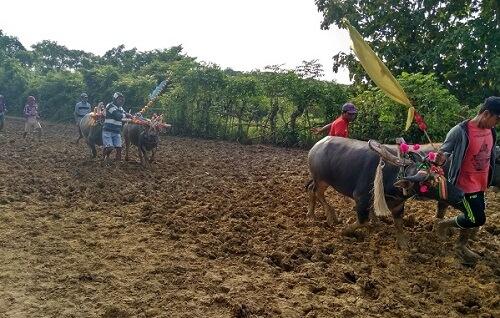 Tradisi Lombe, Mutiara Terpendam Kepulauan Kangean. Foto Kartika, Ulum, Irfan