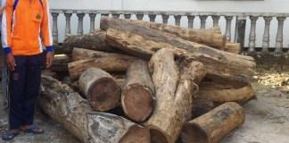 Barang Bukti Kayu yang distita hasil ilegal loging/Foto Nurcholis/Nusantaranews