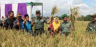 Prajurit TNI dari Kodim 0824 Jember berpose menjelang panen padi di sawah bersama petani. Foto Sis24/ NusantaraNews.co
