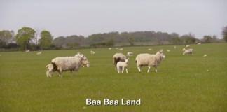 Baa Baa Land, calon film paling membosankan. Foto Crop: Trailer Baa Baa Land/ YouTube