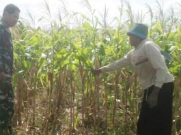 Pendampingan UPSUS pertanian di Ponorogo (Foto Istimewa/Nusantaranews)