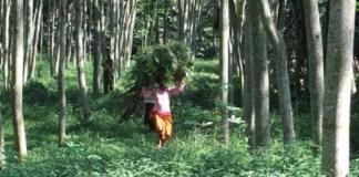 Kesejahteraan Petani dan Baik-Buruk Kebijakan Perhutanan Sosial (Ilustrasi). Foto: Dok. agroindonesia.co.id