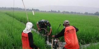 TNI membantu petani memberantas hama yang menganggu tanaman padi. Foto: Dok. Penrem