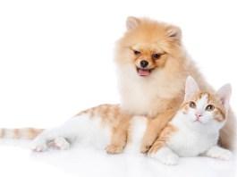 Anjing dan Kucing (Foto via petproblemsolved)