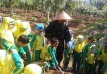 Pada jumat (16/03/2018) pagi, anak-anak usia persiapan KB Al-Azhar mengunjungi Kebun Pepaya California milik Masduki di Desa Puwosari. (Foto: NUSANTARANEWS.CO/Fakhrudin)