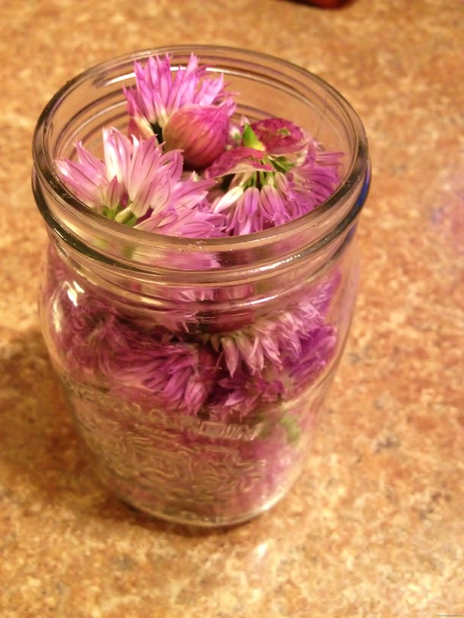 Chive blossoms for vinegar on Nutmeg Disrupted