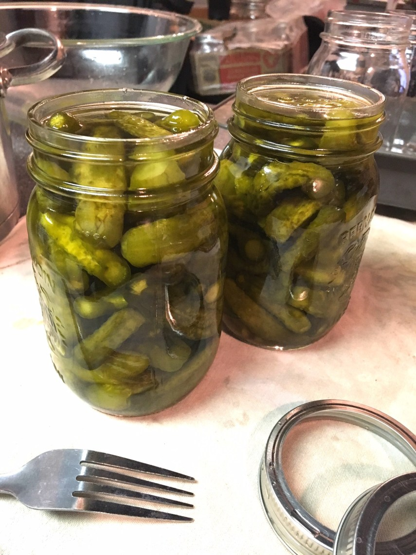 Making 6 day fermented gherkins in the Nutmeg Disrupted kitchen