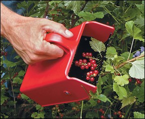 Berry Scoops are on the top 10 list of Christmas gits for gardeners on Nutmeg Disruped